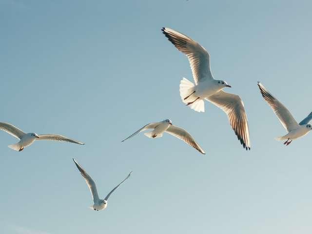 Connaître les oiseaux du bord de mer