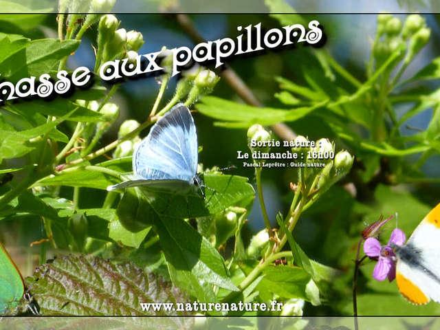 Visite – Chasse aux papillons