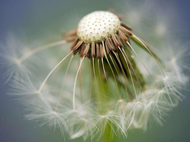 Visite – La flore miraculeuse