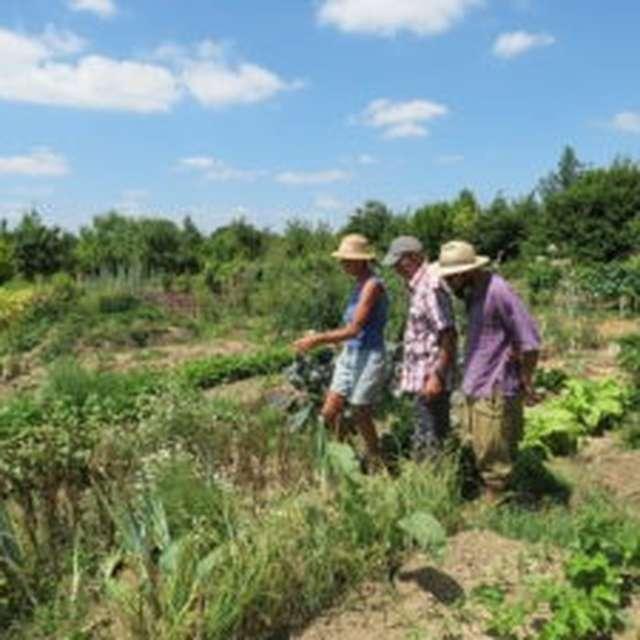 JEUDI JARDIN: JE FAVORISE LES PLANTES COMESTIBLES