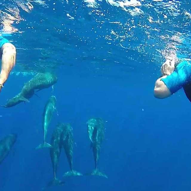 Nage avec les Dauphins - Safari photos - Bateau Annett