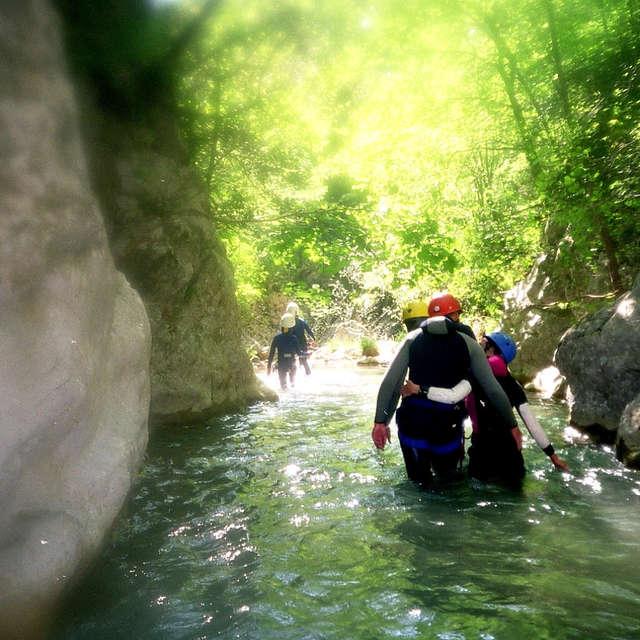 Balade aquatique: Back to the tree