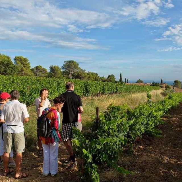 Découvrez la viticulture biologique au Domaine Clos de Caveau