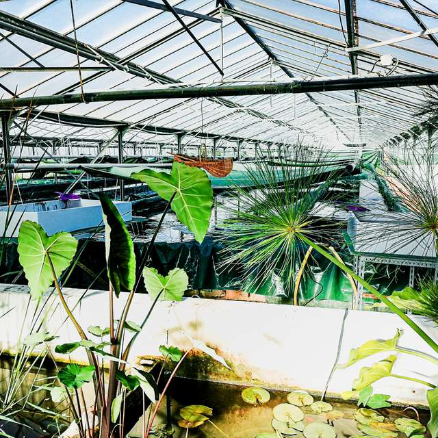 Visite guidée : A la découverte d'une ferme de spiruline et de sa production