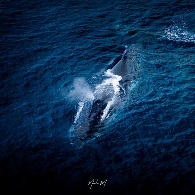Sortie observation des baleines - Casy Express