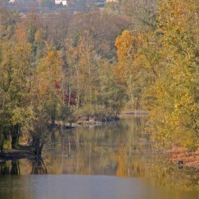 Etang Bois de la Bâtie