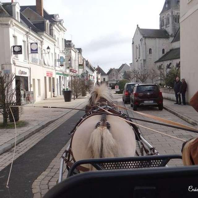 Cool Attelage - Promenades en attelage à Selles-sur-Cher
