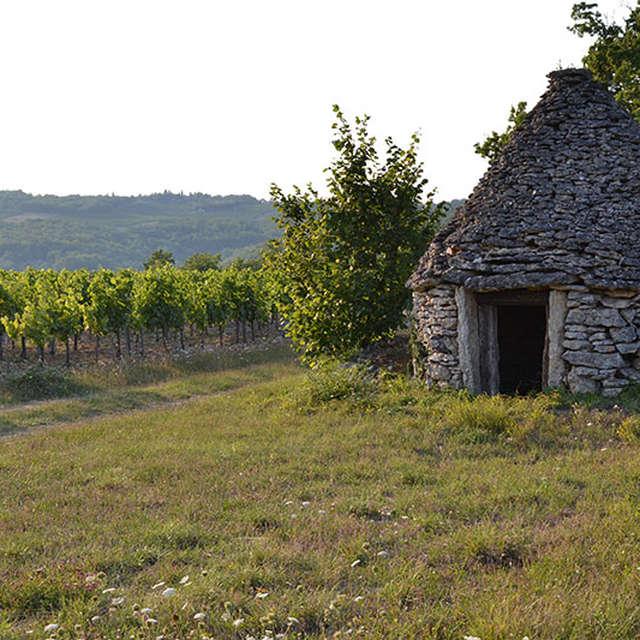 Domaine Campoy