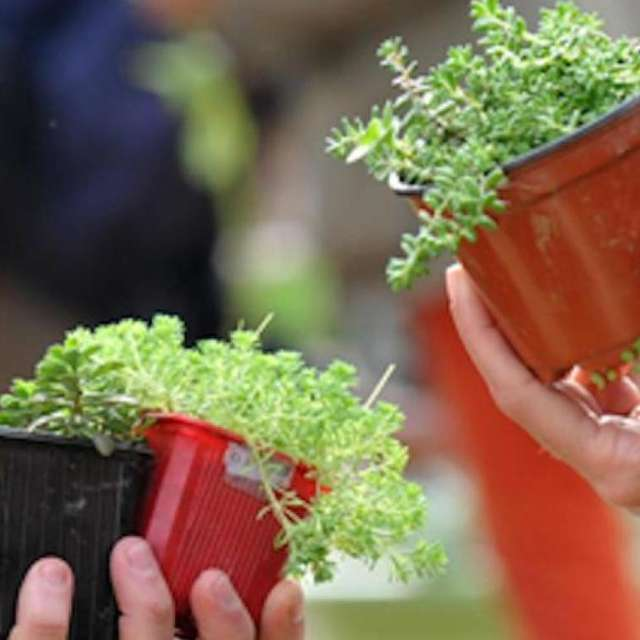 TROC' PLANTES
