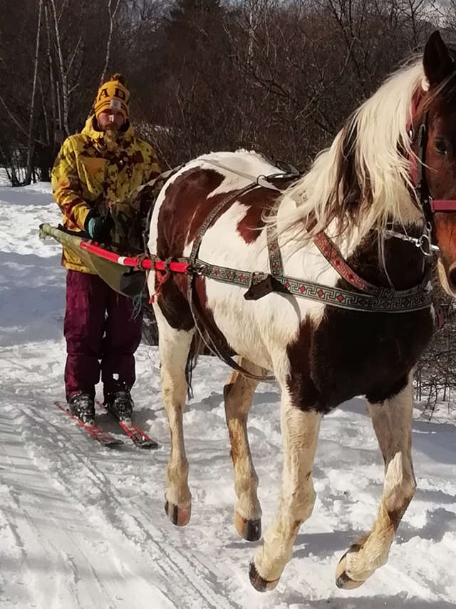 Ski joëring - Las Moutas