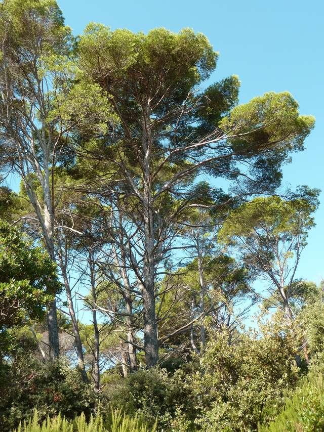 Point rencontre : Balade naturaliste et découverte sur l'île de Porquerolles