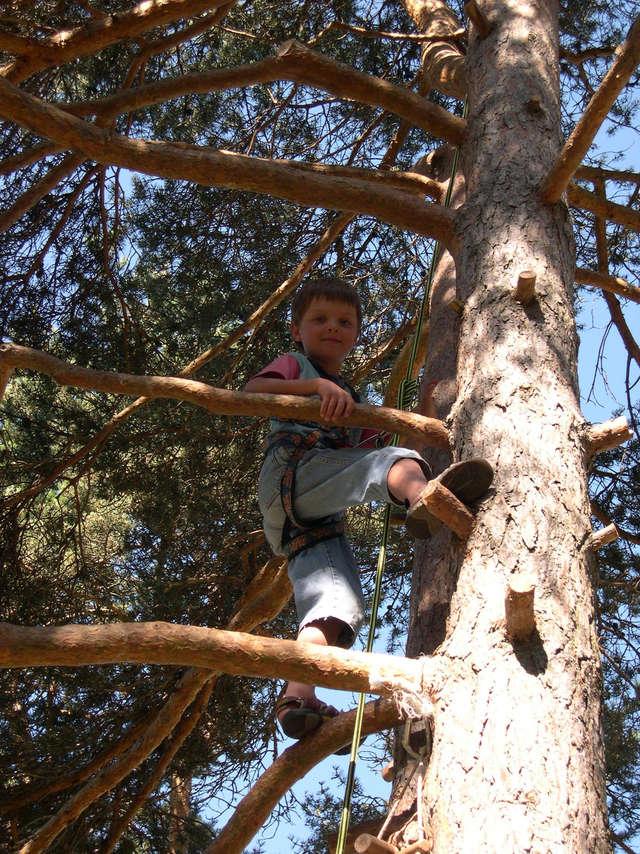 Au fil des branches