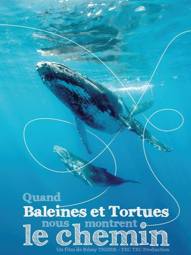 Ecran nature à Porquerolles - Quand baleines et tortues nous montrent le chemin (R.Tézier)