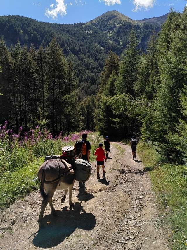 Randonnée avec un âne - La Belle ânerie