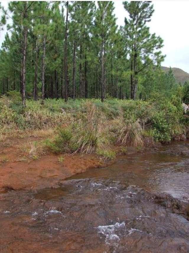 Piste 1 - Piste du Creek aux Boucles de Netcha