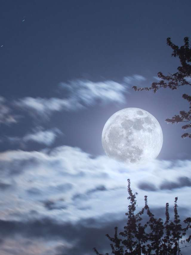 Visite guidée : Eveil au monde de la nuit