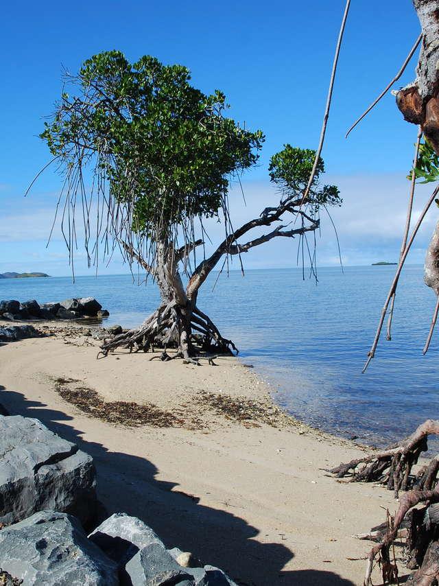 La plage de Tanguy