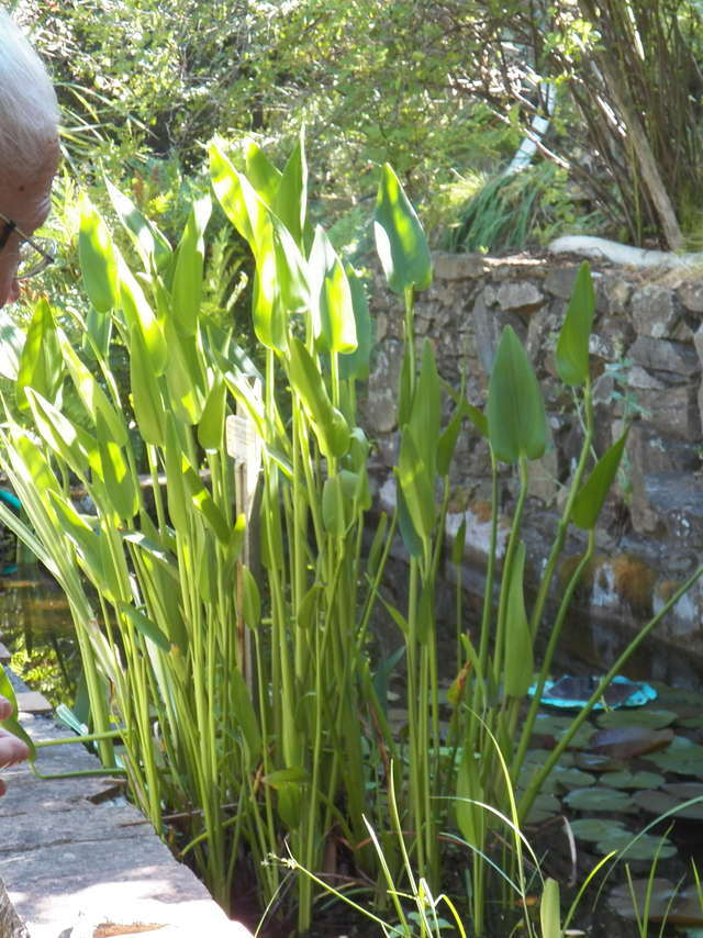 Jardin botanique remarquable l'Hardy-Denonain