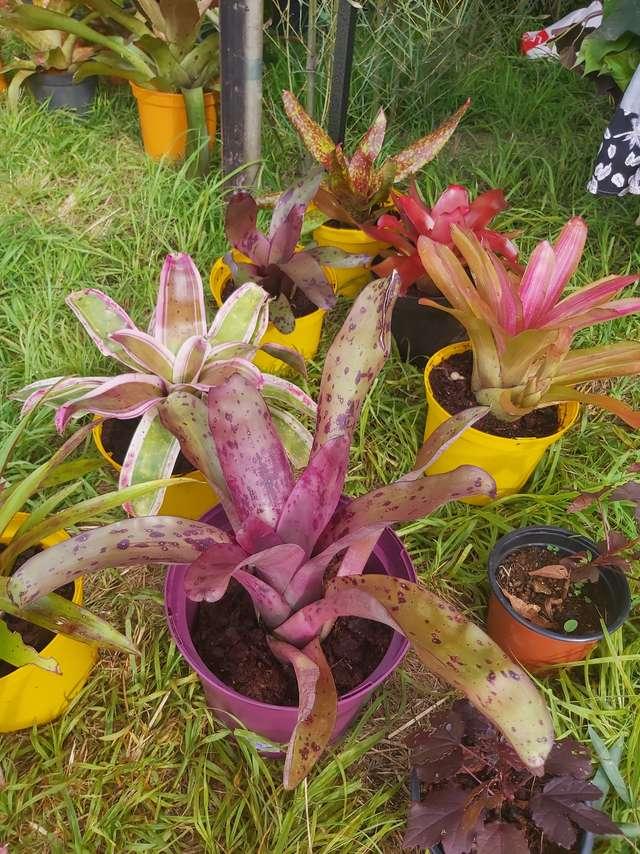 Marché des plantes à Unia