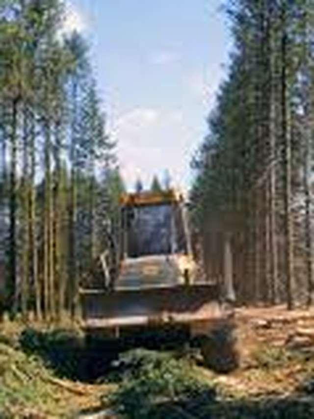 PROJECTION : Le temps des forêts, un film de François-Xavier Drouet
