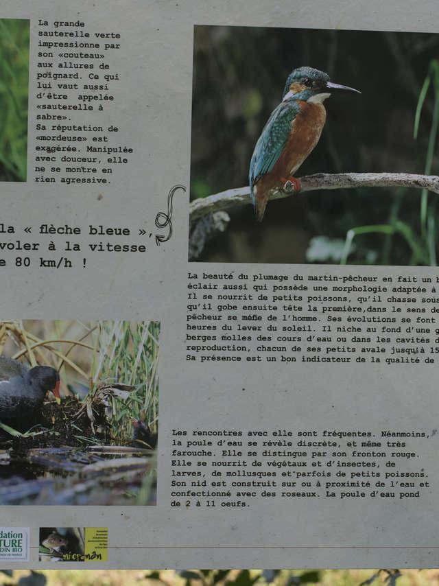 Sentier Nature du campagnol amphibie