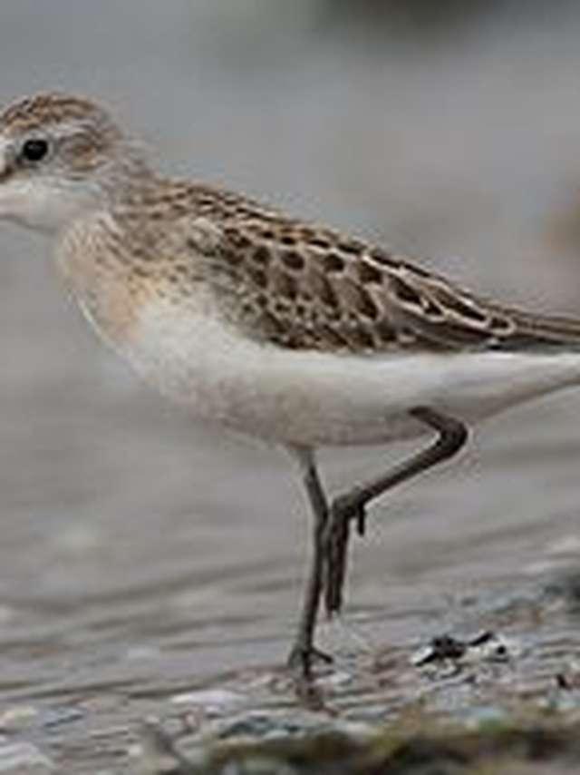 Sortie ornithologique - Les oiseaux hivernants