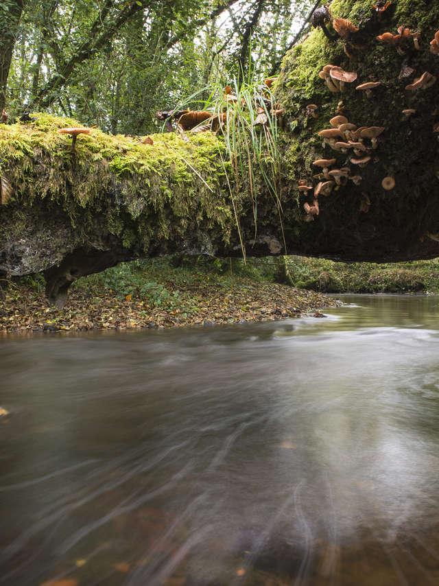Léguer en fête - Le Léguer, rivière sauvage ! Expo photo de Déclic'Armor