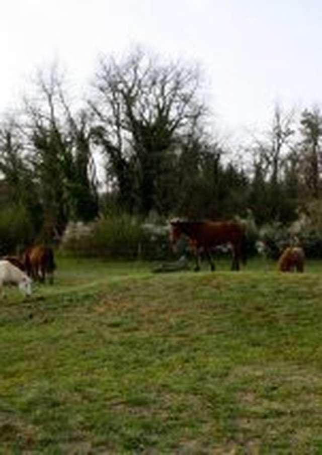 Domaine équestre de Saint-Paul: Balades équestres