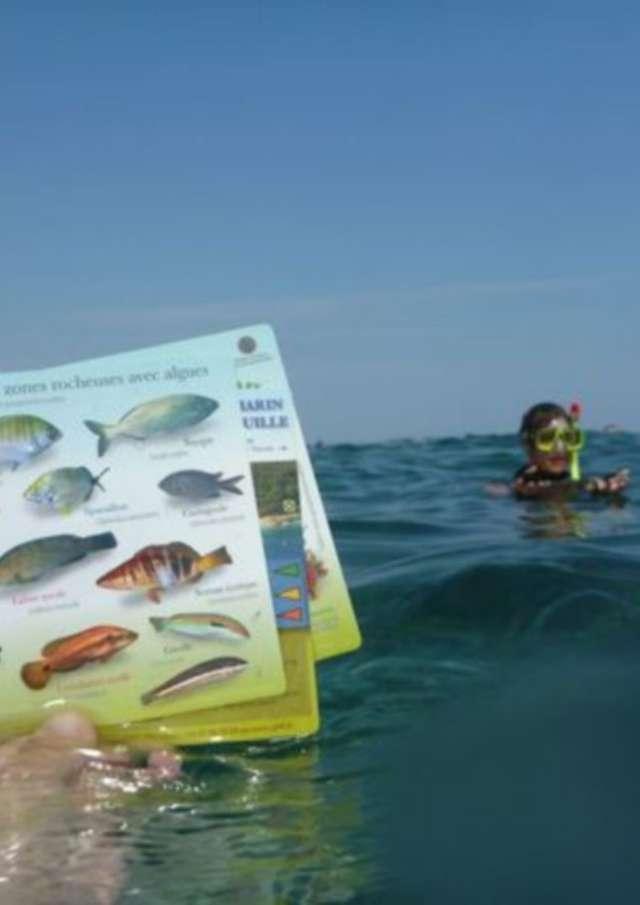 Chasse au trésor aquatique