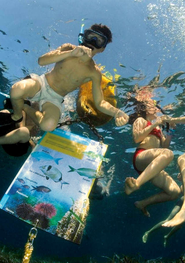 Guided tour: snorkeling