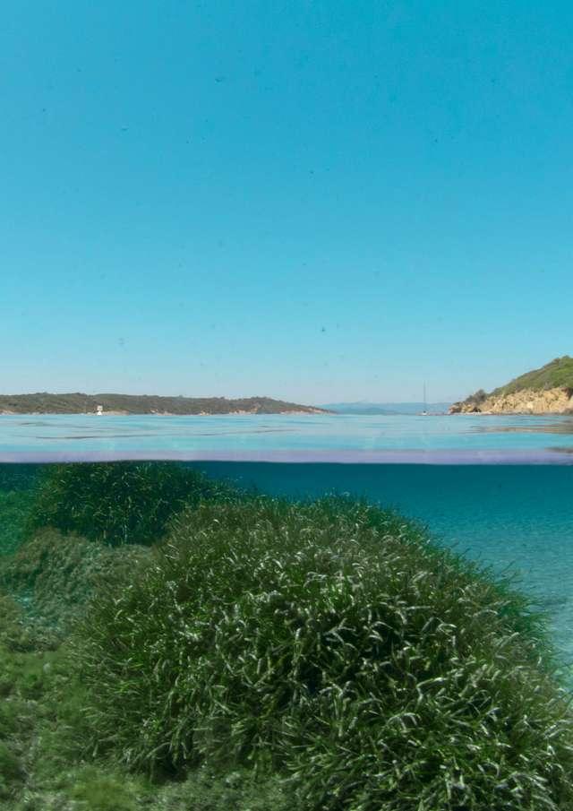 Point rencontre : Randonnée Palmée à la Plage du Sud de Port-Cros