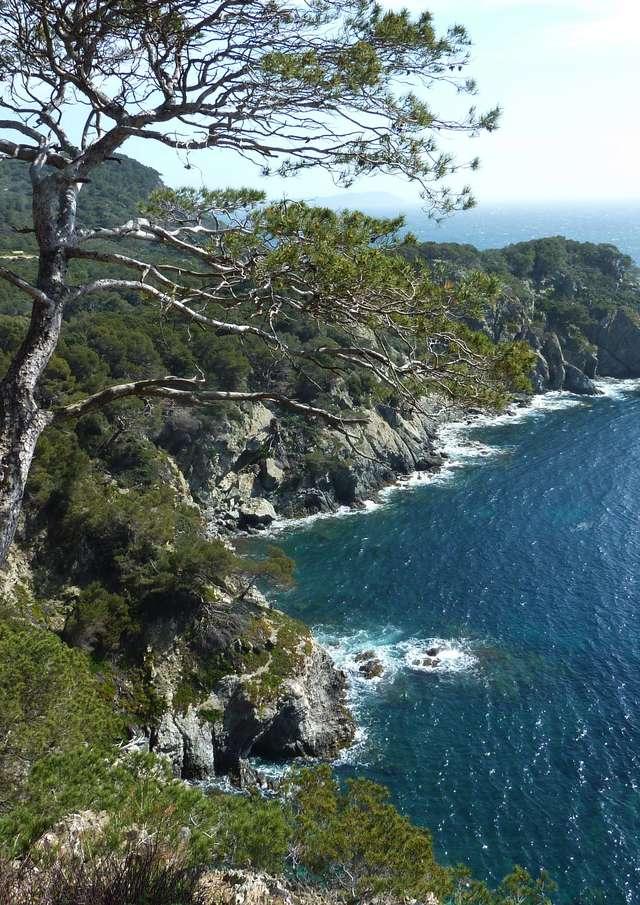 Porquerolles Island, nature and culture