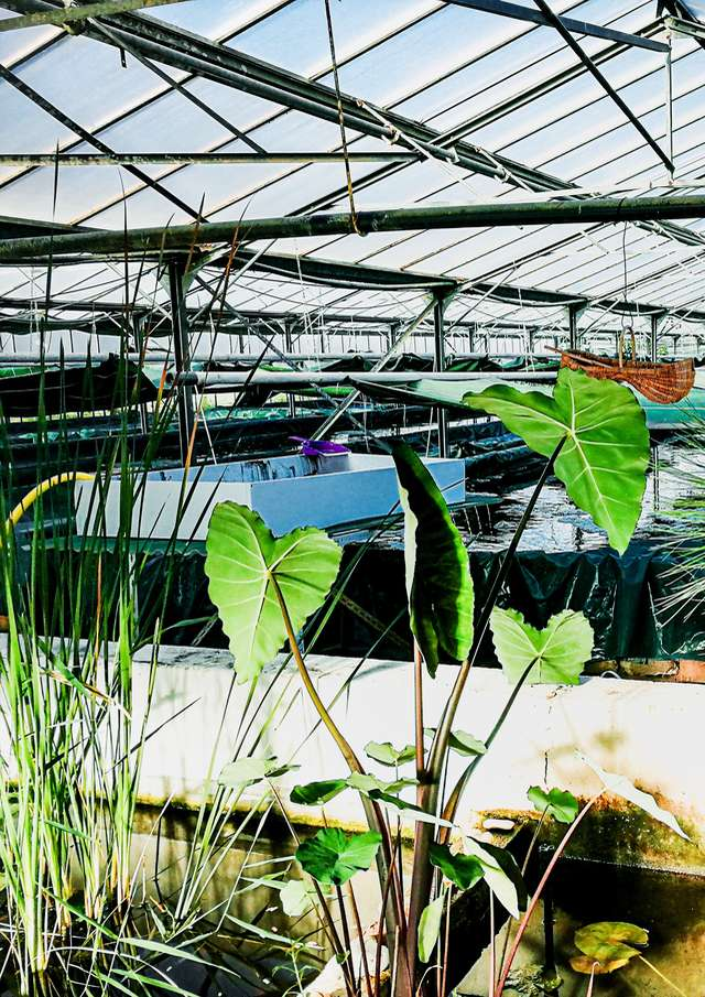 Guided tour: Discovering a spirulina farm and its production