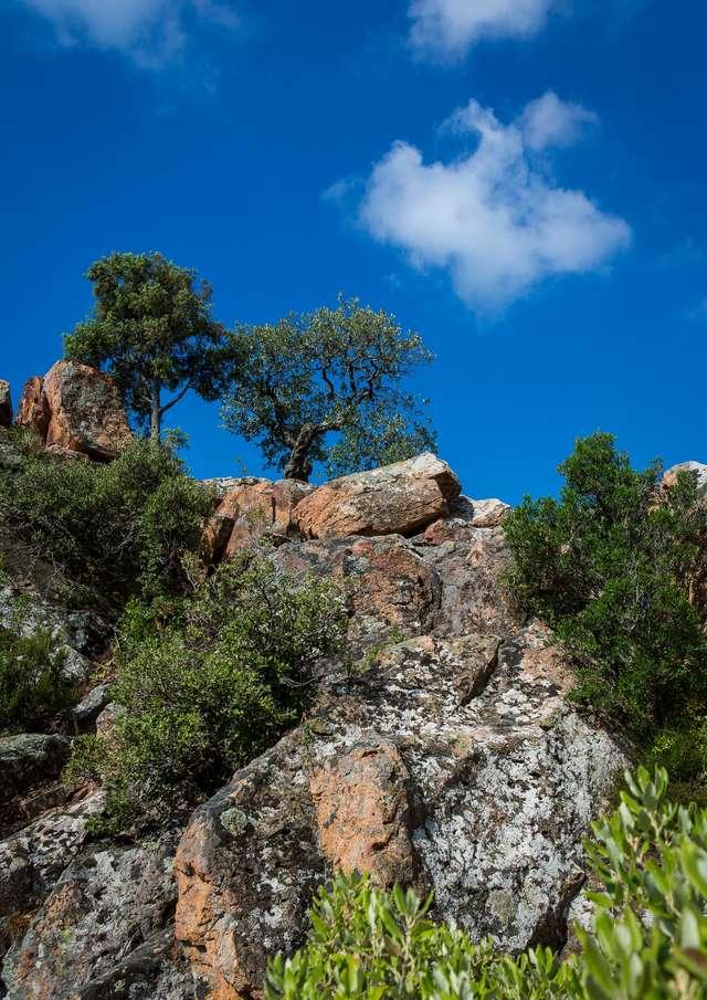 Balade nature commentée aux Gorges du Blavet