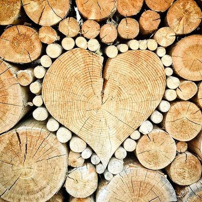 Joli Bois Art: Concours de photos: le regard insolite sur les arbres