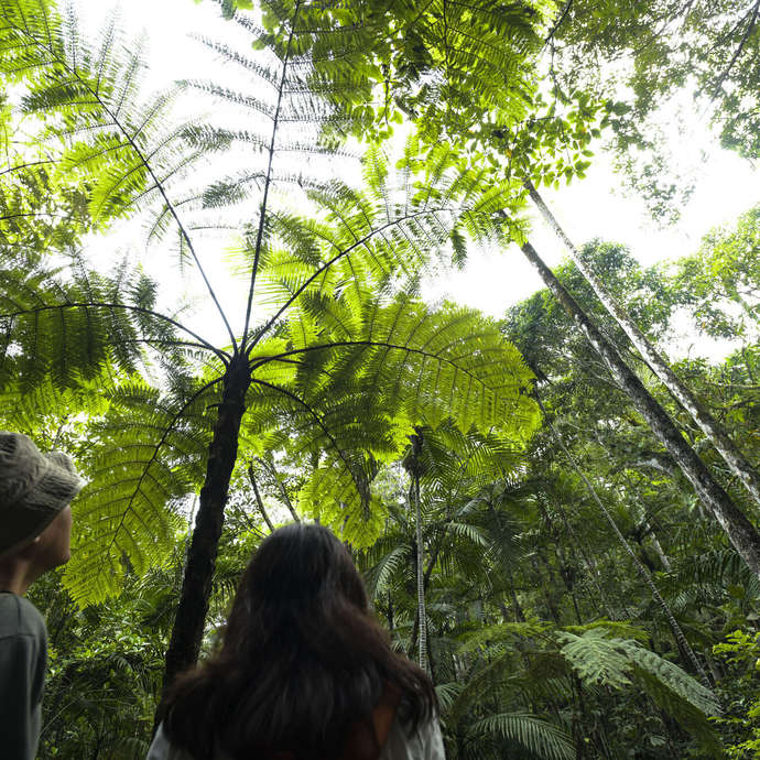 Visite guidée botanique - Parc des Grandes Fougères