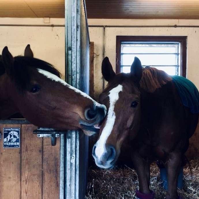 Découvre l'univers des chevaux