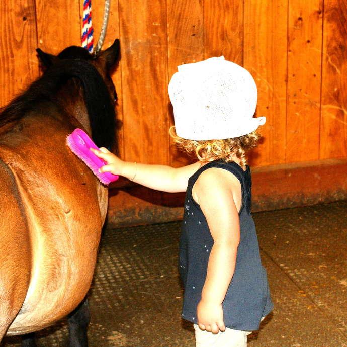 Activité avec les ponettes et les chevaux de la Fondation Domus