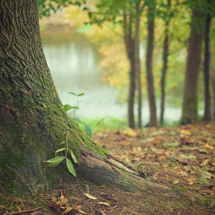Les mille et un mystères de la forêt dombiste