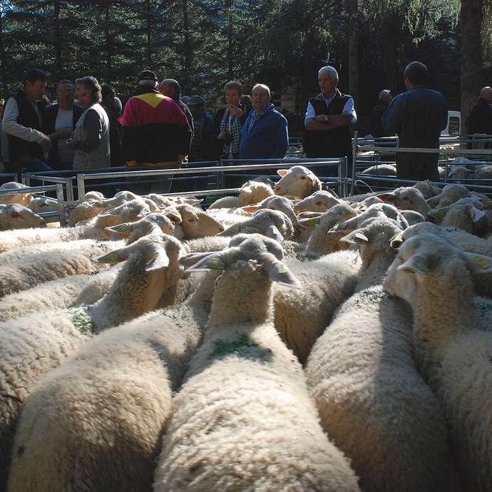 Foire aux bestiaux et repas de la chèvre