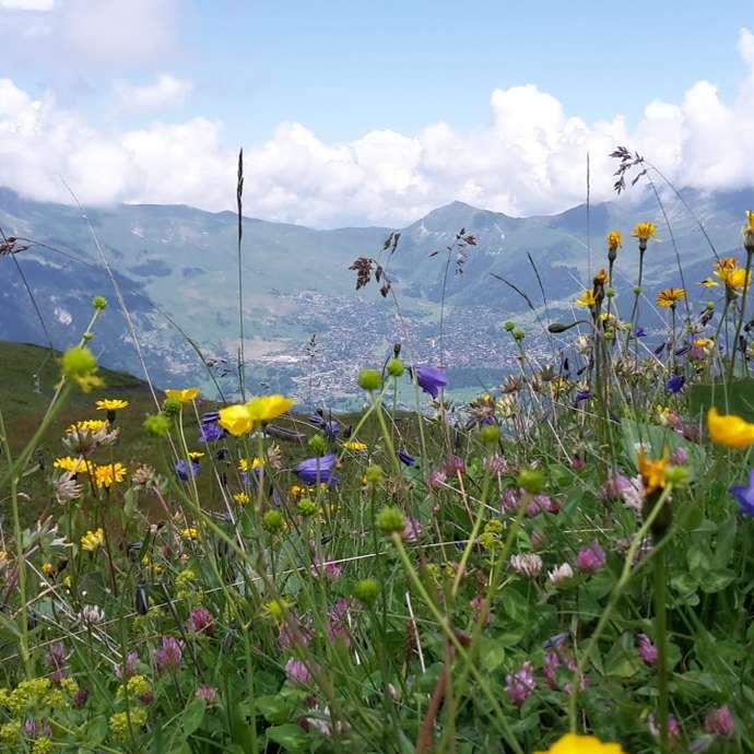 Thematische Wanderung - Bella botanica Bruson