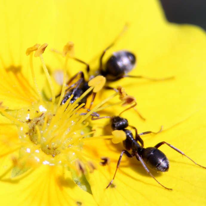 Conférences Intéractives Faune et Flore Alpine