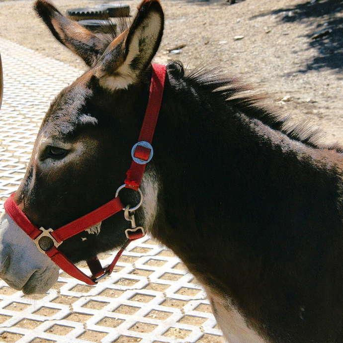 Activités avec les animaux à la Fondation Domus