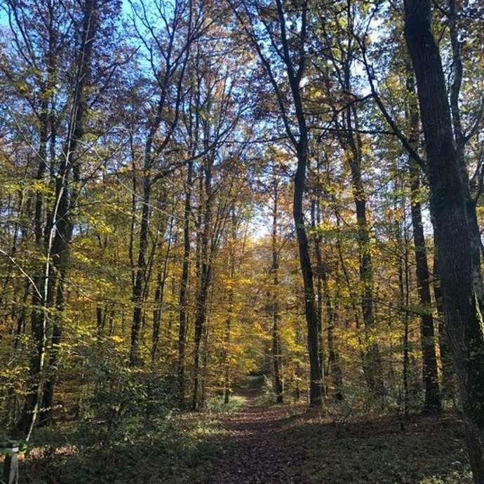 Bain de forêt - Activité Nature bien-être