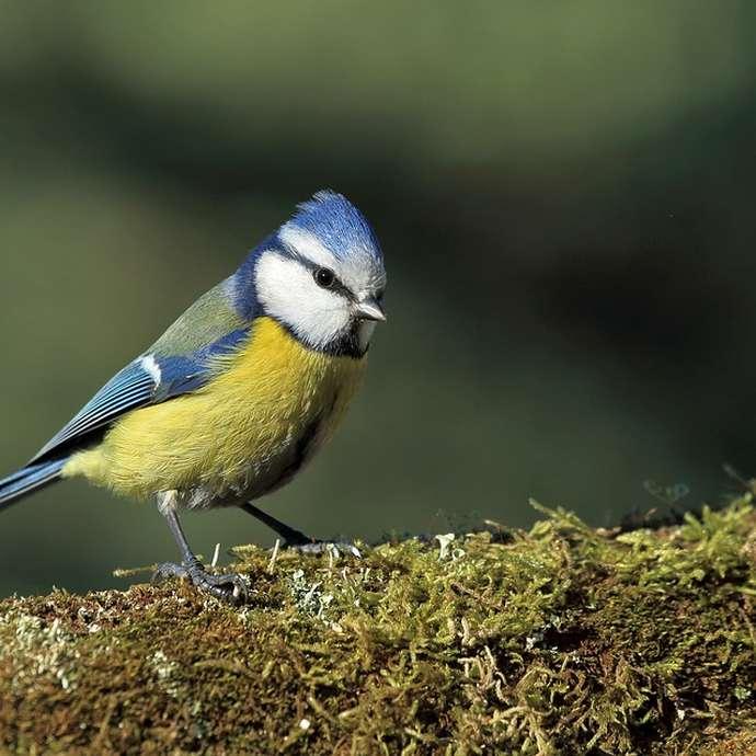[ANIMATION ANNULEE] - Visite - Chants d'oiseaux au bois