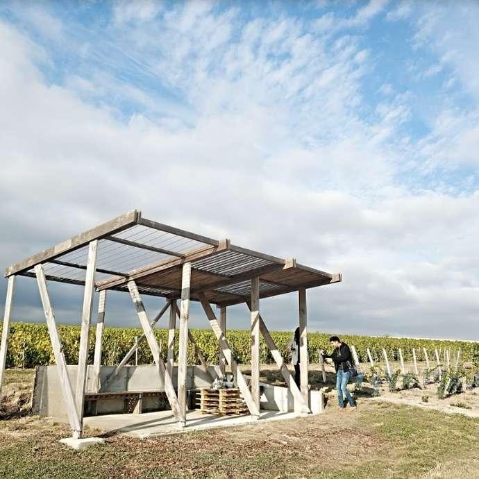 Dégustation de Champagne dans une Loge de Vignes