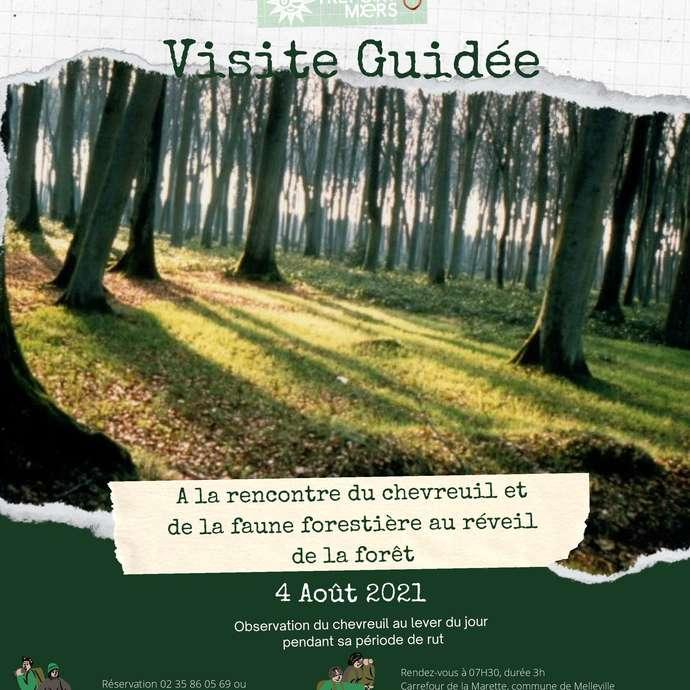 [ANIMATION CONFIRMEE] - Visite en forêt d'Eu - A la rencontre du chevreuil et de la faune forestière au réveil de la forêt