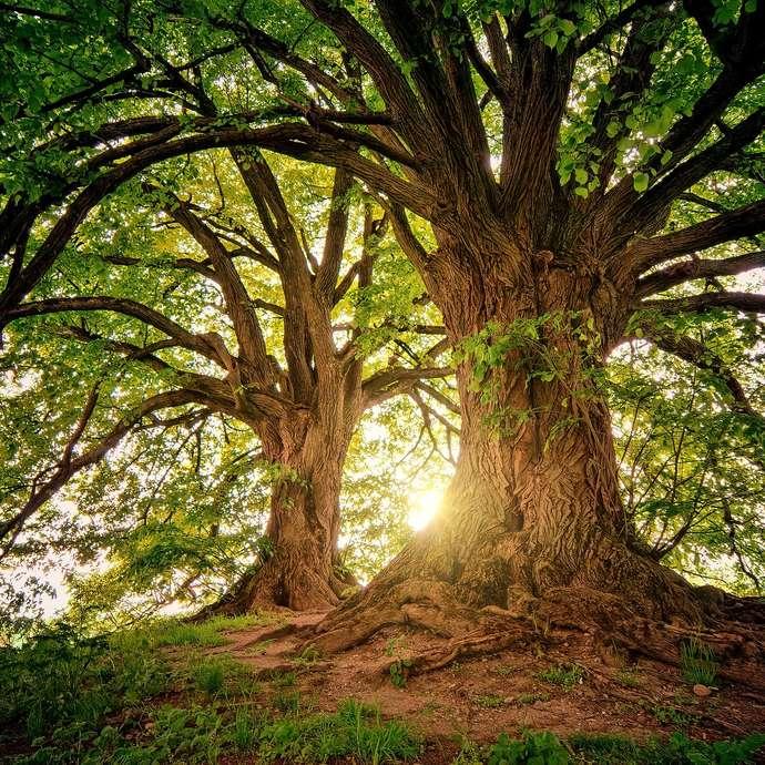 [ANIMATION CONFIRMEE] - Visite de la forêt - la biodiversité